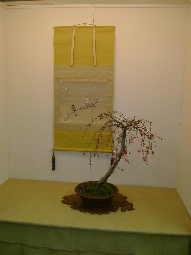 Árbol en exhibición