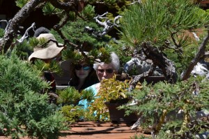 Primer viaje a la Villa Bonsai en Portland. Vivero de Ryan Neil.